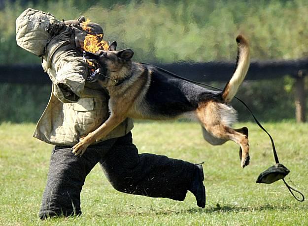 Flash Dog Training