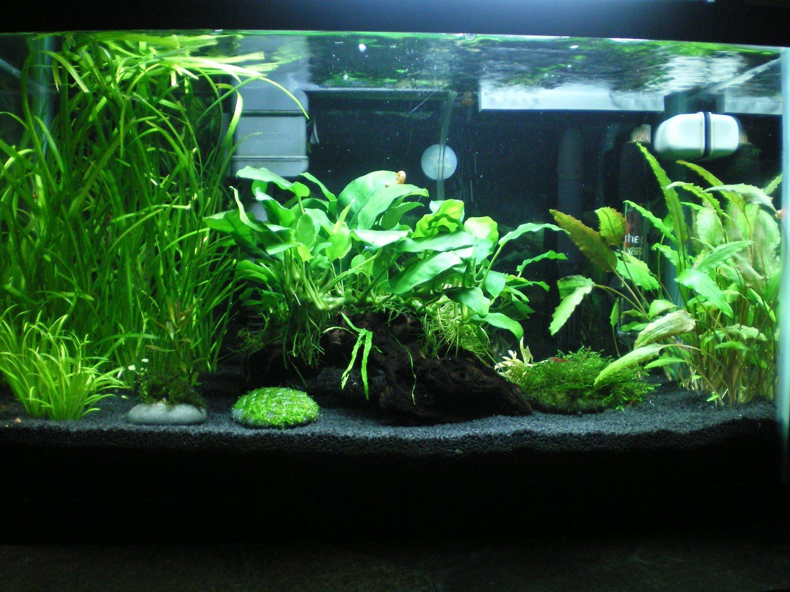 My planted tank adventures for Plante aquarium