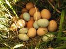 huevos diferentes