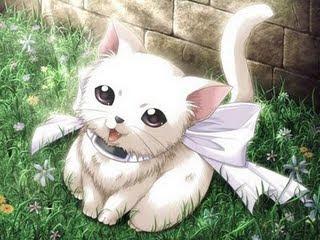 [Mascote] Mês de Maio Gato