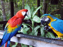 A scarlett and yellow/blue macaw
