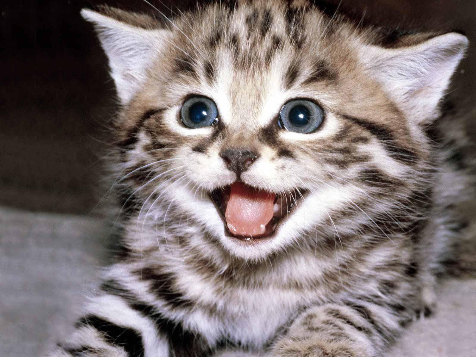 Can Cats Hurt Babies