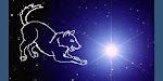 Sirius Canine Care