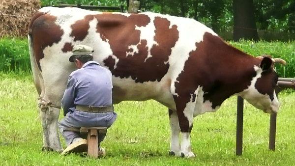 C mo orde ar una vaca animales econom a for Granja de peces