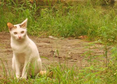 """kucing,cat,hewan,foto"""