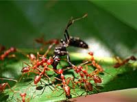 Belajar Disiplin Dari Semut.