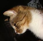 O kocie