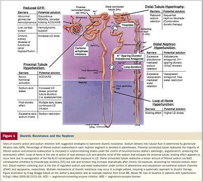 Lisinopril weight loss