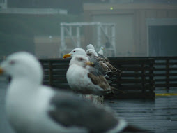 Gulls on the oregon coast