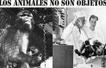 NO a la Experimentación con Animales