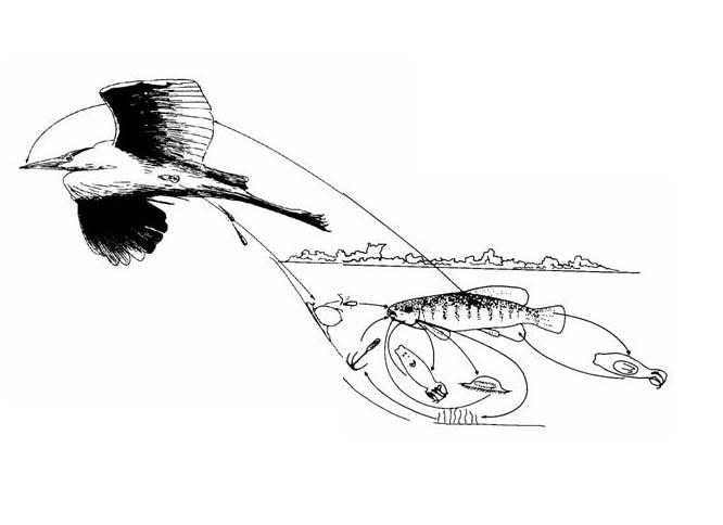 Heron and Killifish