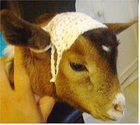 Goatbaby Sweater Patterns « Crafts for Pets « Crafty Tips