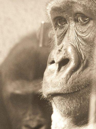 foto immagini animali