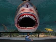 Shark & Baby