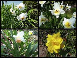 more spring blooms