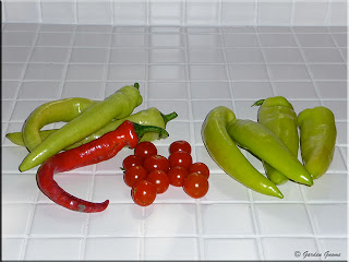 Hungarian Wax peppers, Banana peppers, long red slim cayenne pepper, cherry tomatoes