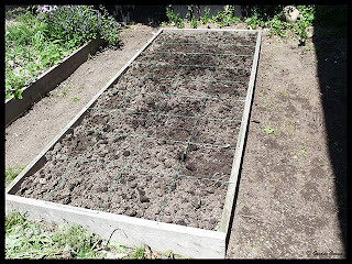 prepared raised bed