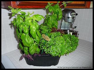 basil combo planter