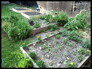 new raised beds orientation
