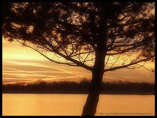 sunset November 11, 2010