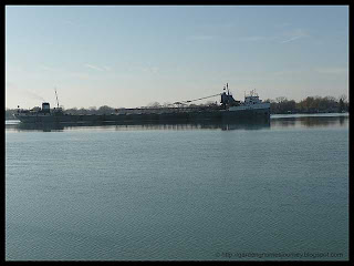 the lake freighter Maumee