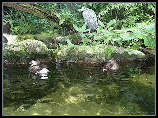 the Florida wetlands exhibit at The Florida Aquarium