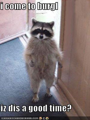 funny raccoon pictures
