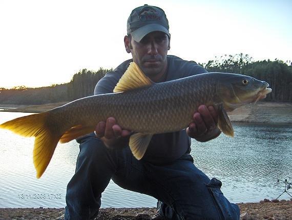 Barbo 3,2 kg Sra Ribeira 13 Novembro 2008