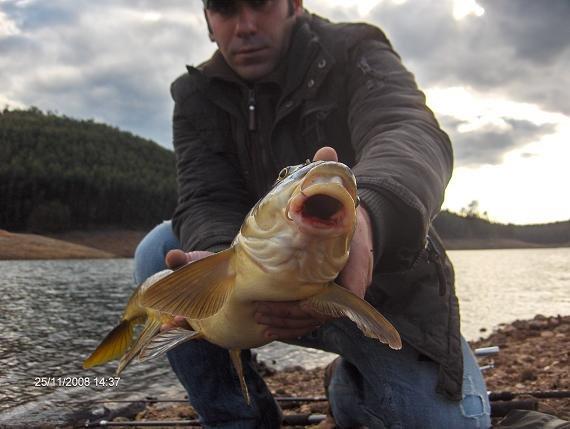 Barbo 4,1 kg Coval 25 Novembro 2008