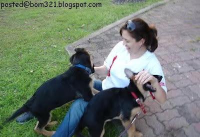 sharifah sofea dan anjing