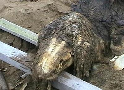 Binatang Aneh Di  Jumpai Di Russia