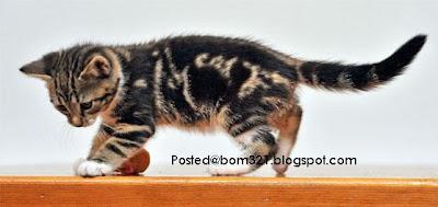 Kucing Yang Tertera Tulisan