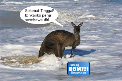 suicide kangaroo