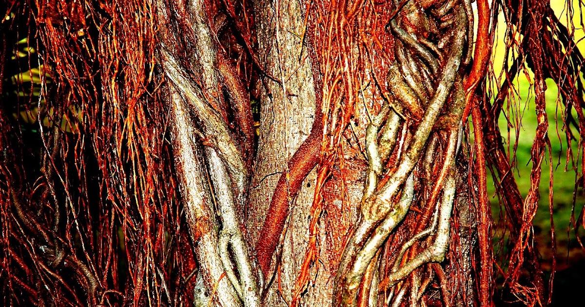lanailestari: Dari Hal Pohon,Cabang Dan Ranting...Sisi ...