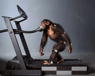 monkey+on+a+treadmill - Picture of Yourself - Introduce Yourself