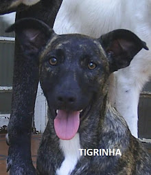TIGRINHA