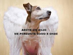 ADOTE UM CÃO