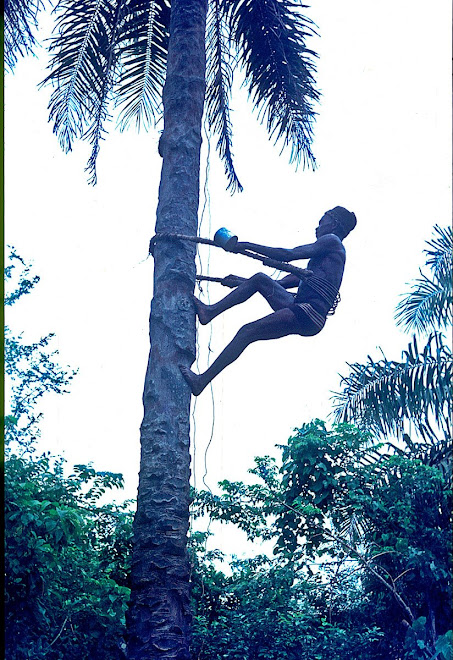 Pa Sam heading up tree for palm wine - near Vaama