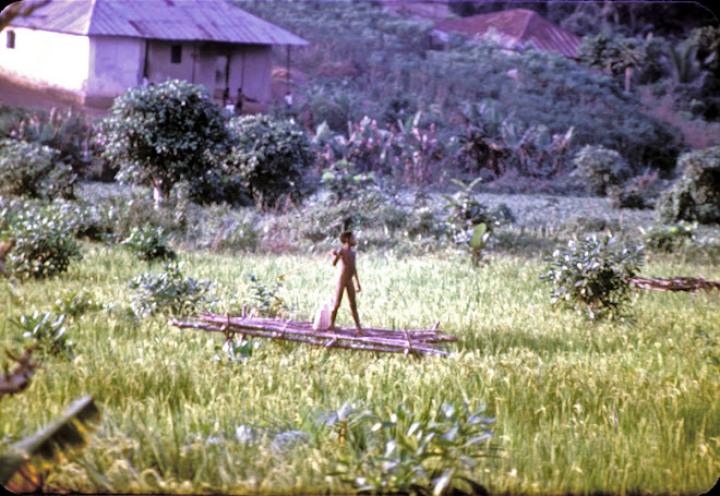 boy driving birds from the rice - Kenema