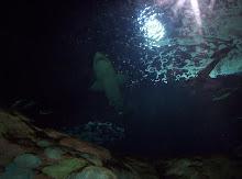 Desde el tunel del acuario