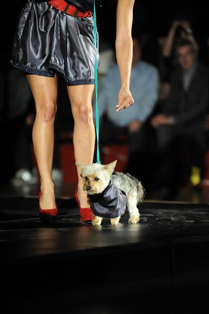 4th Annual Doggies on the Catwalk ~ {Atlanta, Georgia Event Photographer}
