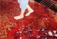 [Imagem]Foto de criança no matadouro pisando no chão cheio de sangue