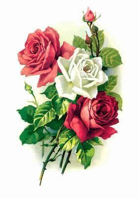 http://1.bp.blogspot.com/_lddFFu6s4yQ/SSqGkJjQruI/AAAAAAAAGpo/XUbnzcxq2z4/s400/kwiaty1.jpg