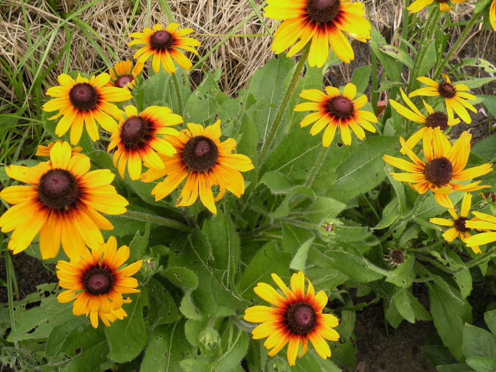 Marys Louisiana Garden Summer Days