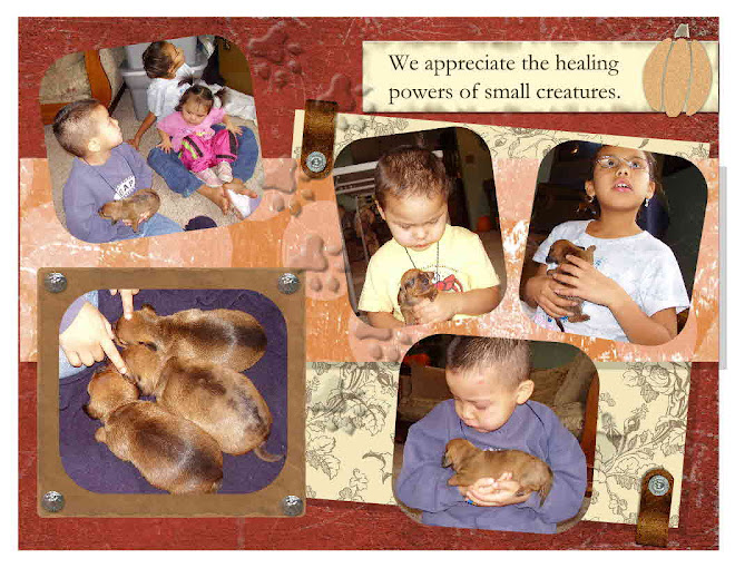 The kids loved playing with the litters of puppies.