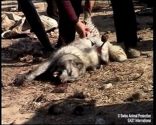 http://1.bp.blogspot.com/_lfMjimg4Jbo/Sq_Jt1KY0uI/AAAAAAAAABQ/UGnyGOLXAOY/s320/granjas+pieles+china_maltrato+animal+1.jpg
