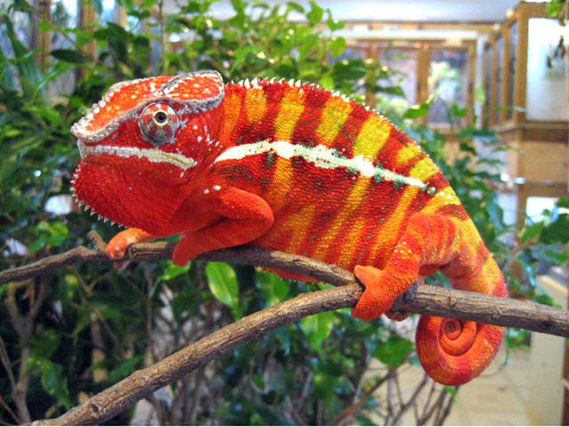 mesasina corner: The Red Iguana