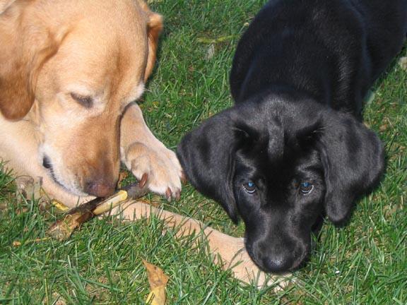 [2+dogs,+1+stick]