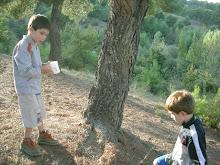 Collserola Natural Park