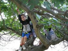 Rowan on the Fig tree